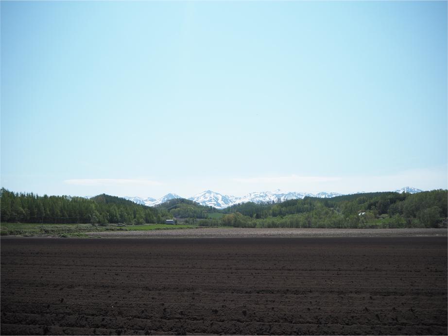 大雪山は雪